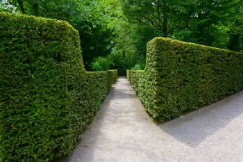 Hedges around parks can halve pollution, study finds