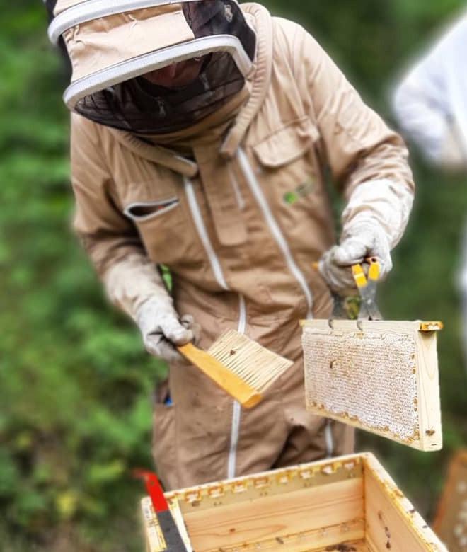 recolter recolte miel apimelis apiculture apiculteur ruche abeille