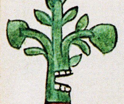 """Vom """"grünen Hoden"""" zur Guacamole"""