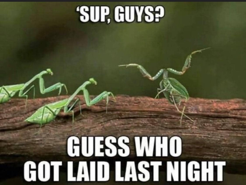 Sup guys? Guess who got laid last night Preying Mantis with No Head Meme & Many More Funny Sex Memes