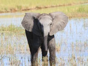 Drømmereise til det sørlige Afrika
