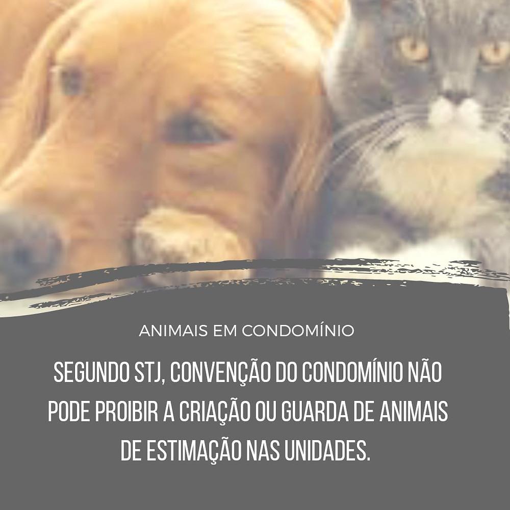 condomínio não pode proibir animais STJ
