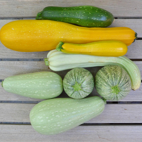 COURGETTE IN ZOETZUUR