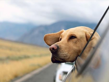 Zabieram psa na wakacje