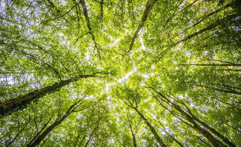 Met behulp van goede data en data science tooling bouw je een accurate forecast. Hierdoor blijf je door de bomen het bos zien!