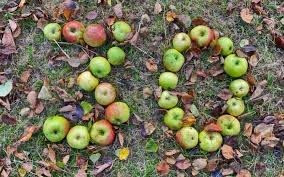 Celebrating 30 years of Apple Day