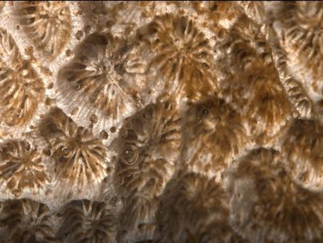 正在消失的珊瑚