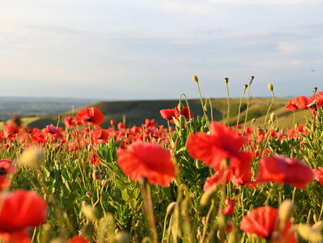 Wiltshire's Poppy Season