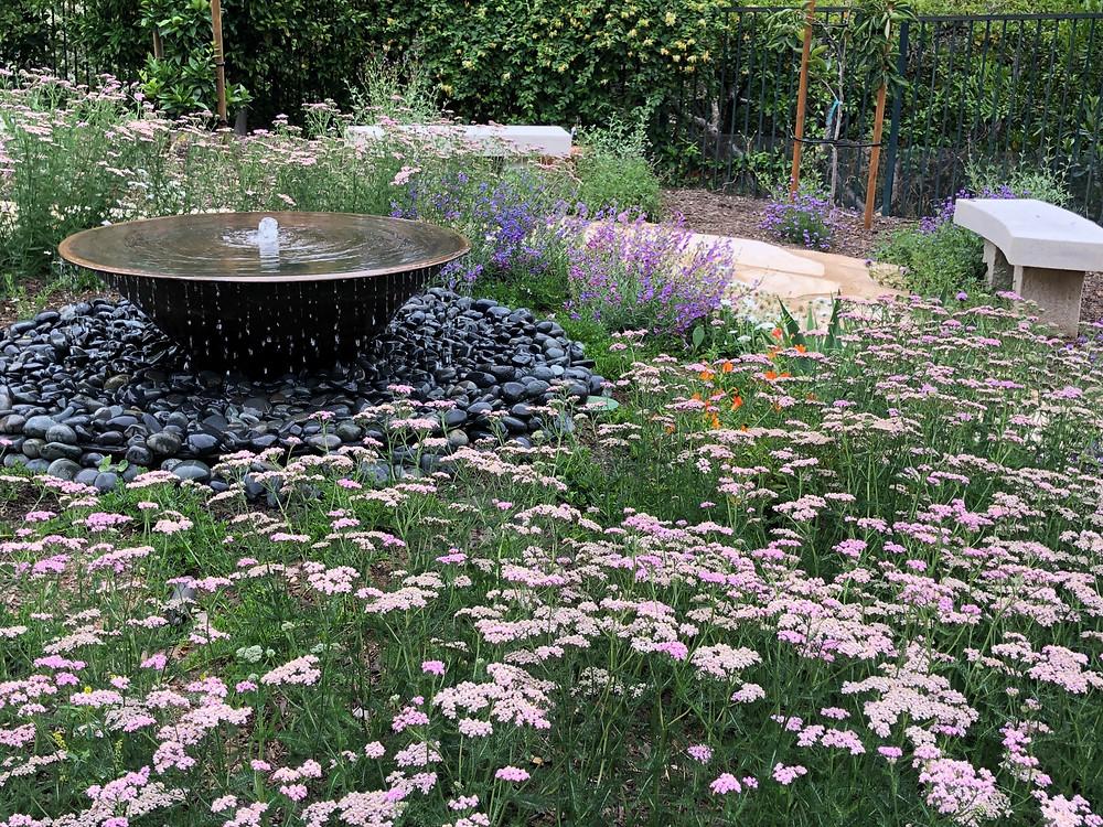 10 California Native Plants For Spring Planting