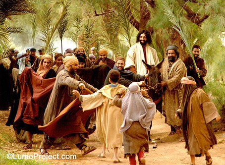 Sunday Reflections - The Triumphal Entry