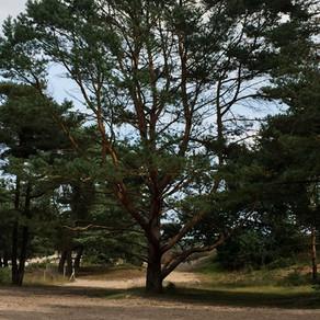 Ik ben een boom
