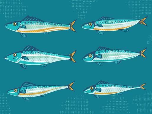 Investir dans la sardine au Luxembourg