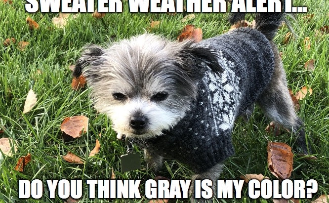 It's time to keep pets warm!