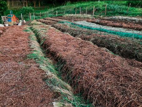 Nueva tierra. Empezando una huerta en permacultura de 400 m².