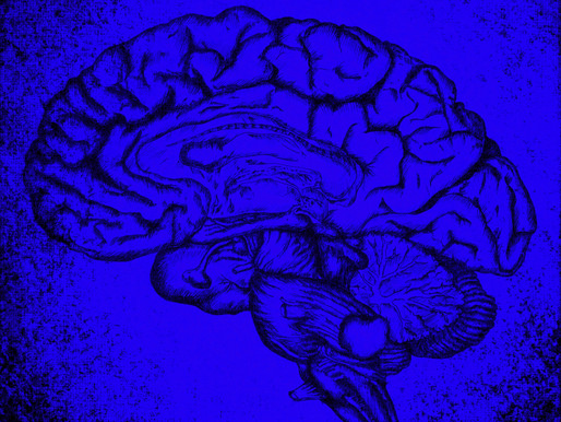 5 wow facts, the brain & happiness