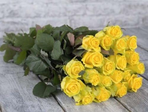 Марина Левенштейн. Розы