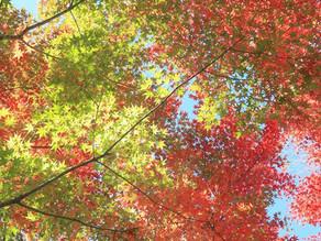 秋の区立植物園