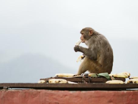 Feeding My Soul with Bananas
