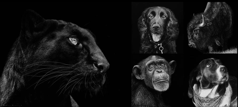 Scratchboard Wildlife Artwork - black panther, dog, chimpanzee, bison