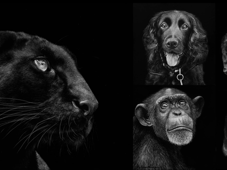 How to Create Black Fur on Scratchboard | Tips + Techniques