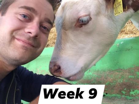 Ranger Stu's Virtual Zoo - Week 9 - Farm Animals!