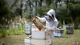 Evaluation des Bienengesundheitsdiensts