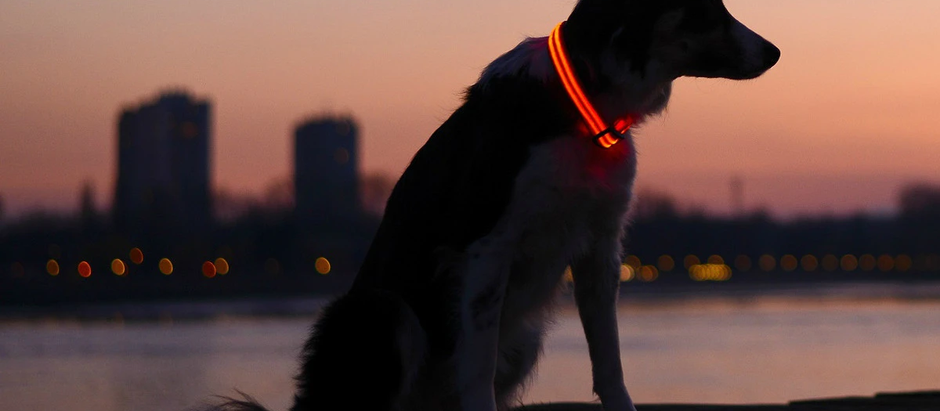 lllumiseen LED Dog Collar – LED Illuminated and USB Rechargeable Dog Collar