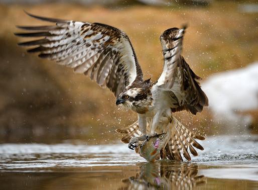 22 и 23 марта Калуга станет центром фотографии дикой природы