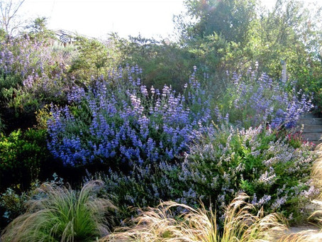 GOING WILD WITH NATIVES: Avoid Invasive Plants, Use Natives Instead!