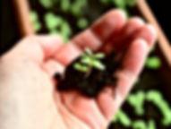 zum Schutz der Pflanze. Auf der Hand.jpg