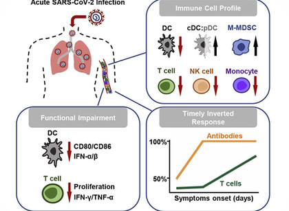 Major Gaps and Lag Time in Immune Response to Sars-Cov-2.