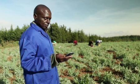 Initiative du FIDA : offrir des conseils agricoles sur téléphone mobile à 1,7 million d'exploitants