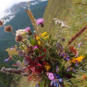 Травы – подарок природы