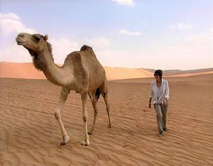 The love of the desert