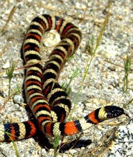 dreams of snakes ,dream interpretetion answers