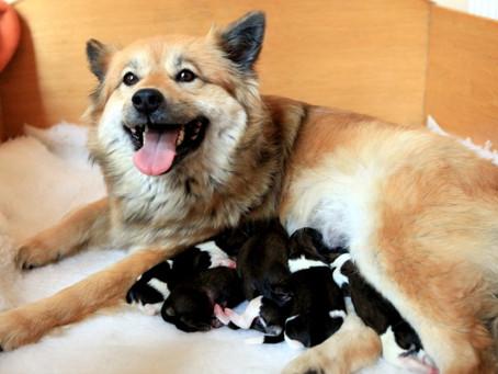 (Ra)Mira als Mama -  Erste Lektionen in Sachen Erziehung...