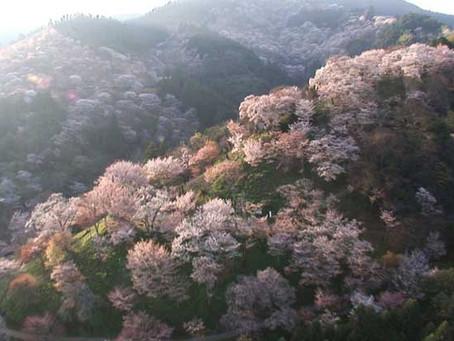 【NHKハイビジョン特集】天空の旅人 さくらの春を飛ぶ