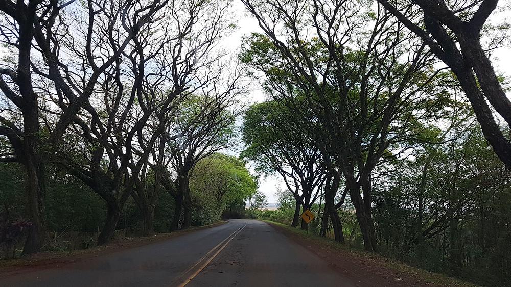 Foto de uma estrada do estado do Paraná