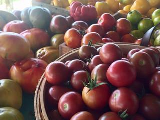 Week 12: Tomato Town