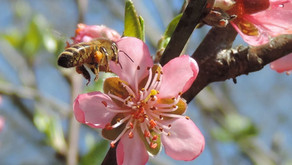 Protecting our pollinators should be a  priority for everyone; not just farmers