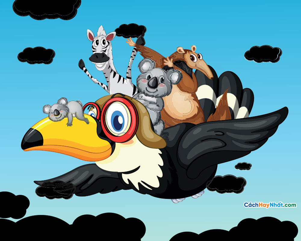 Động vật corel - Corel animals