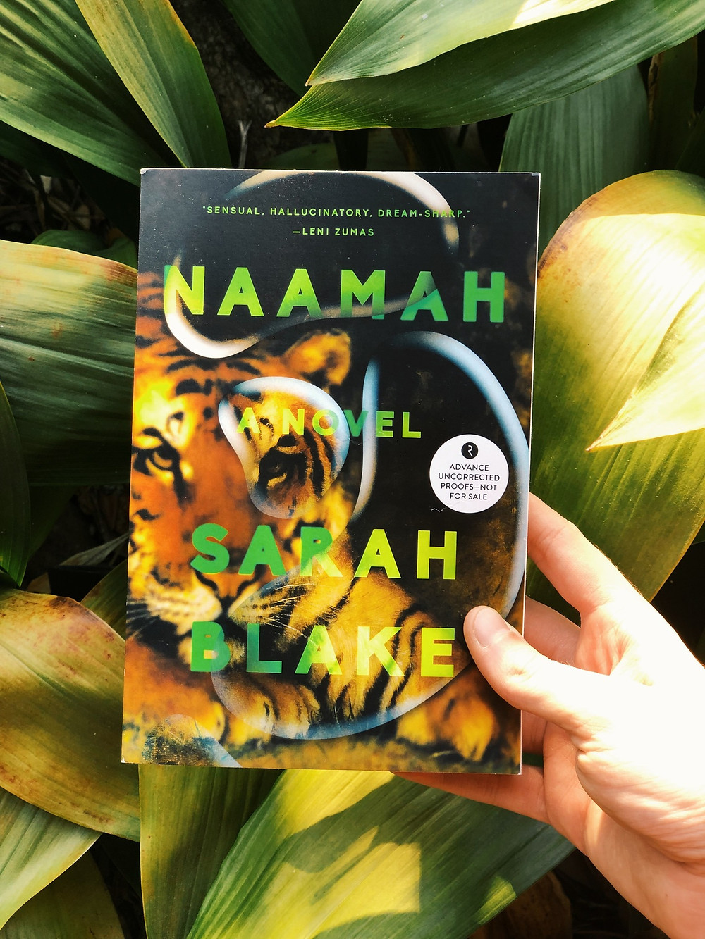 A hand holds up the book Naamah in front of a green-leafed plant