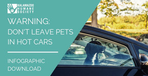 Do Not Leave Your Pet in a Parked Car