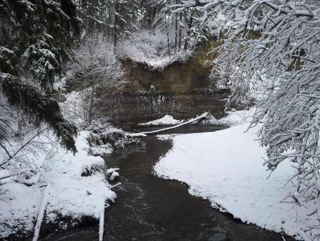 Forgotten in an Albertan Winter