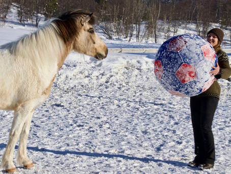 Life lessons learned from horses - From old school boss to modern day leader