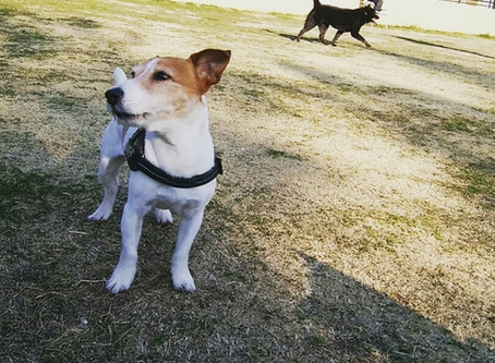 なぜ愛犬達にドッグランは必要なのでしょうか?