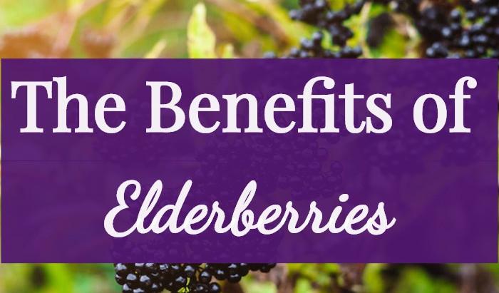 ELDERBERRIES: NATURAL IMMUNE SUPPORT FOR YOUR FAMILY