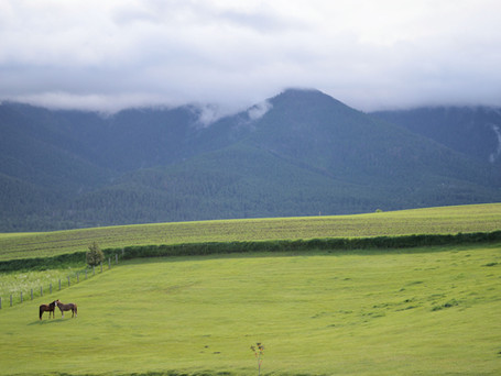 A Season of Writing and Green Mountains