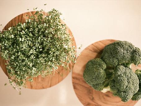 Microgreens 101: Broccoli