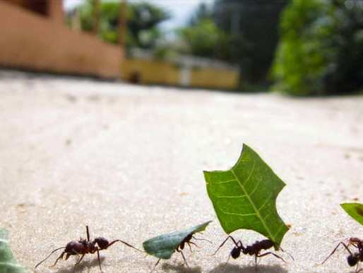 The Secret To WHAT CAN ANTS TELL US ABOUT LEADERSHIP?